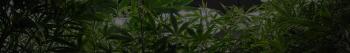 Medical Marijuana Dispensary Insurance